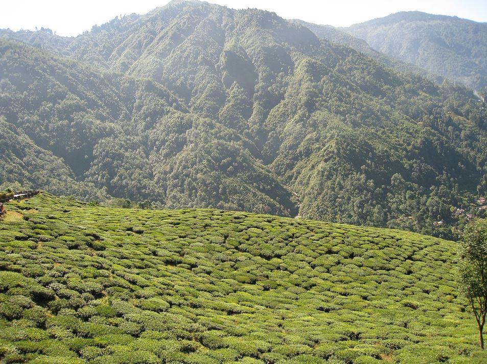 Darjeeling tourism