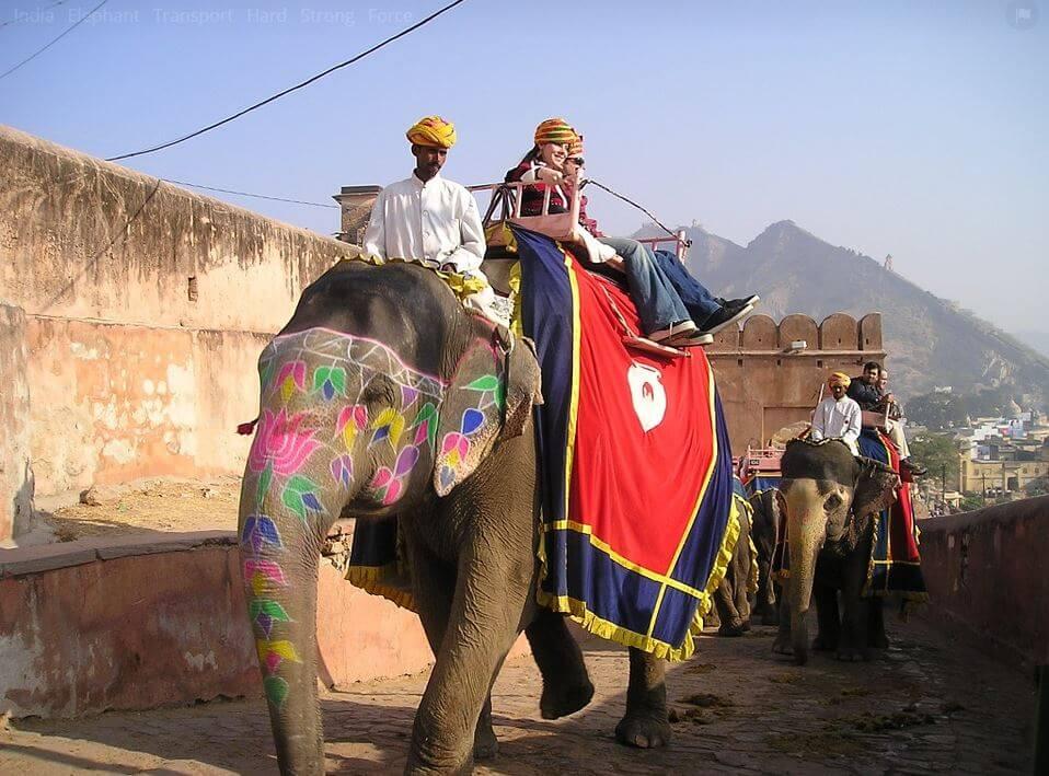 India animals symbols and meaning -elephant