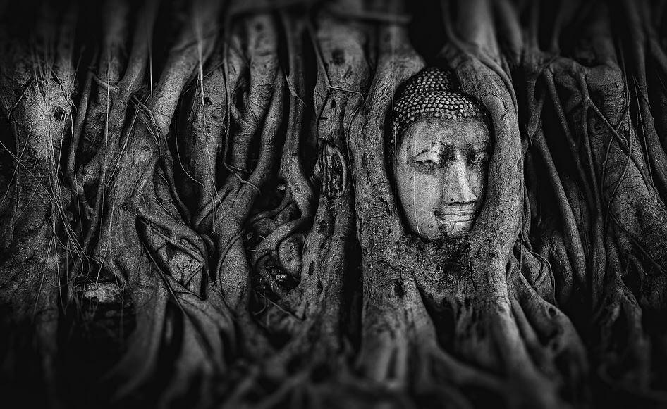 25 Buddhist Symbols You Must Know