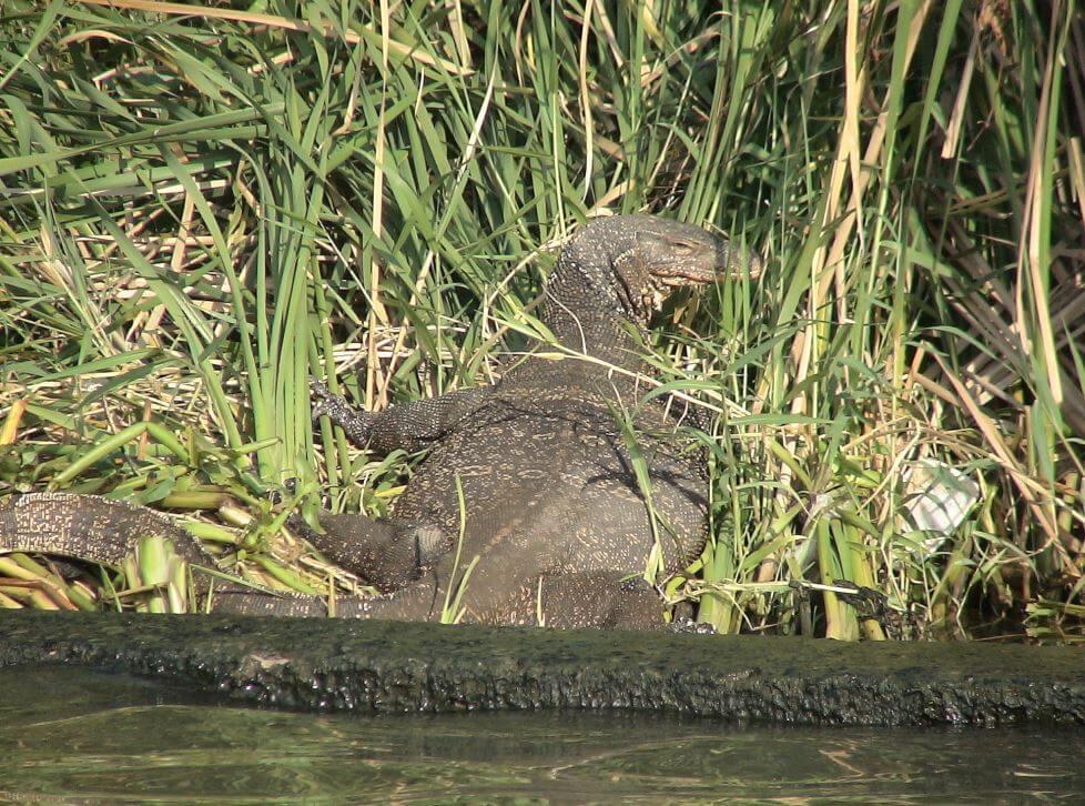 Wild life in Thailand